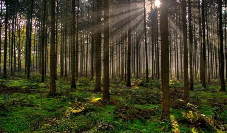 La FAO recomienda la inversión privada en bosques