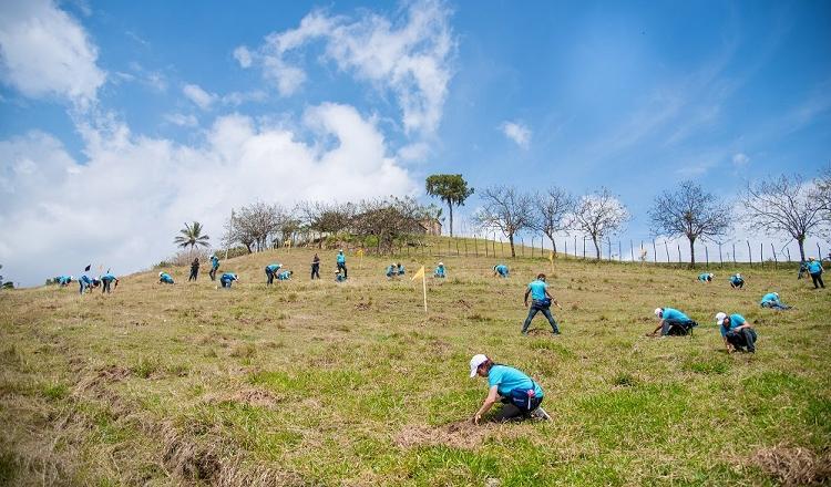 Jornadas de reforestación en el Plan Sierra