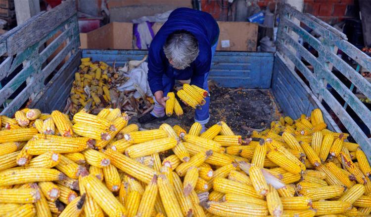La pérdida de comida se produce sobre todo durante el traslado desde el lugar de producción al de consumo. Foto: FAO/Oliver Bunic